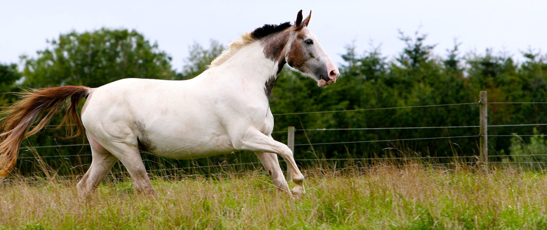 køb en hest jylland